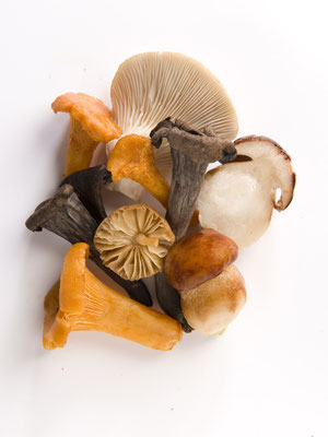 photo culinaire Clermont Ferrand,Avergne, Champignons Borde