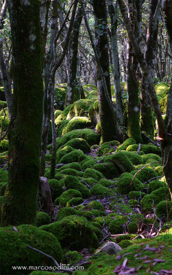 Foreste del Sulcis 1