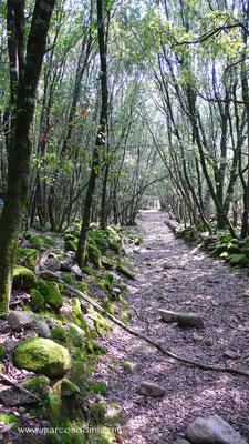 Foreste del Sulcis 3