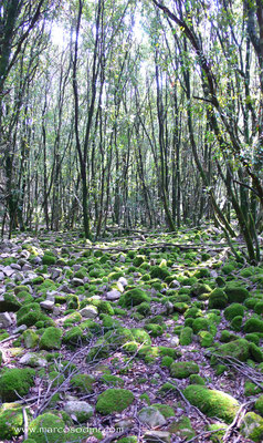 Foreste del Sulcis 2