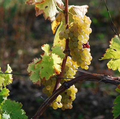Vin : St Esthèpe, Pauillac, Rotschild tout proche