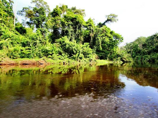 Taman Negara jungle in West-Maleisie