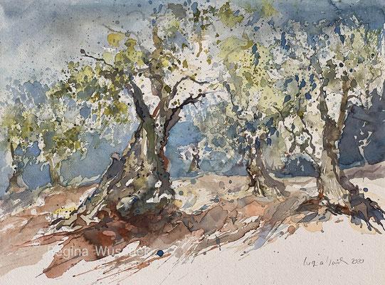 Regina Wuschek, Alte Ölbäume, Aquarell, 2020, 38 x 51, auf Artistico Fabriano