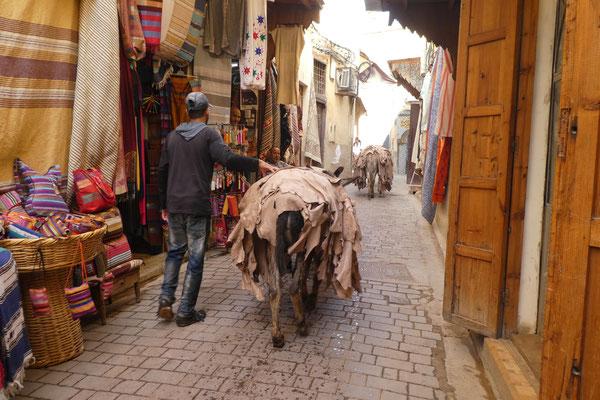 Esel in Fes