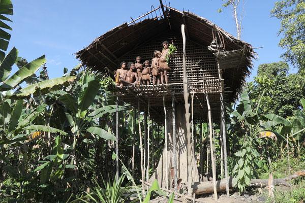 Die traditionellen Baumhäuser im Dschungel Neuguineas bieten Schutz vor Schlangen und anderen Tieren.