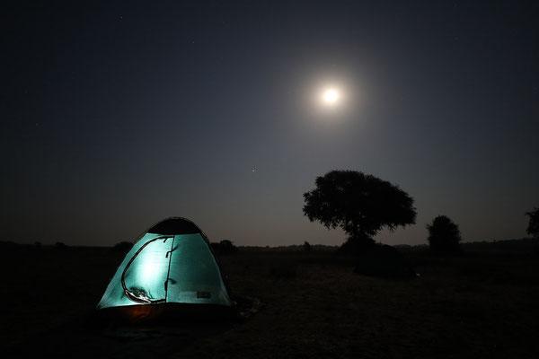 Vollmondnacht am Ufer des Sambesi