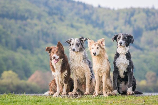 Nucha, Koda, Suri und Mina