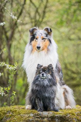 Gaia und Chewie