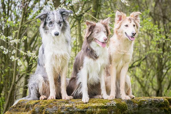 Koda, Muffin und Suri