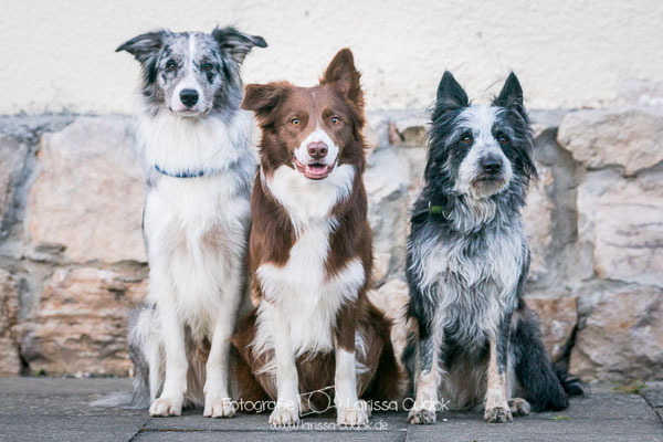 Koda, Nucha und Kaszah