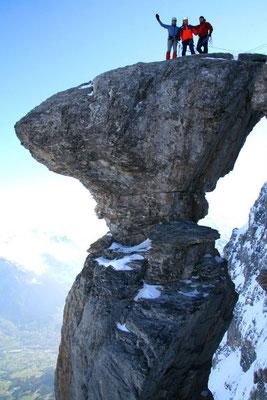 Pilz am Eiger