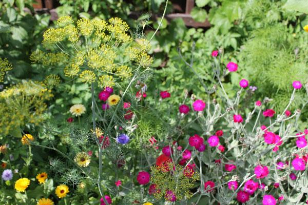 Angelegte Wiese mit Sommerblumen