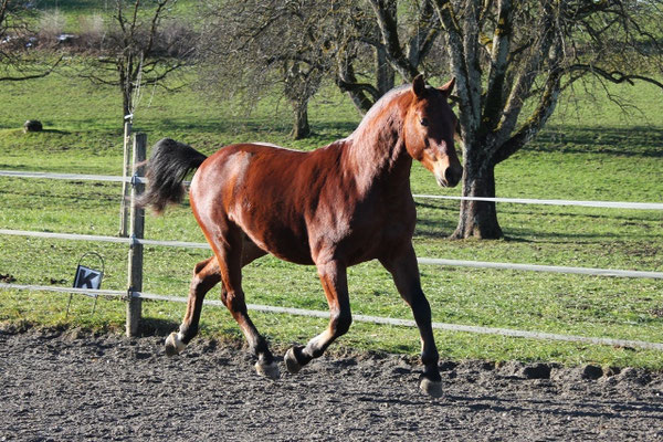 Calypso vom Cherhof - Foto: Jenny Commons