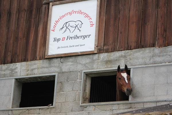 Neugierige Pferde begrüssen Besucher bei der Zufahrt zum Betrieb - Foto: Jenny Commons