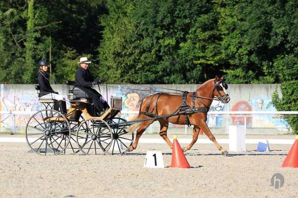 Hitchcock Saba - Foto: Horsefotograf.ch