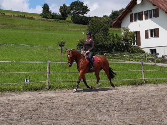 Ausbildungspferd Galante de Sagnarbot