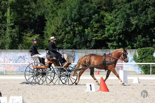 Fahren - Foto: Horsefotograf.ch