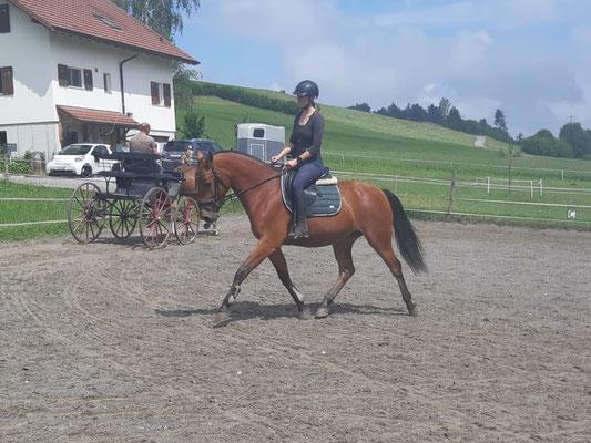 Verkaufs- und Ausbildungspferd Celina vom Riet