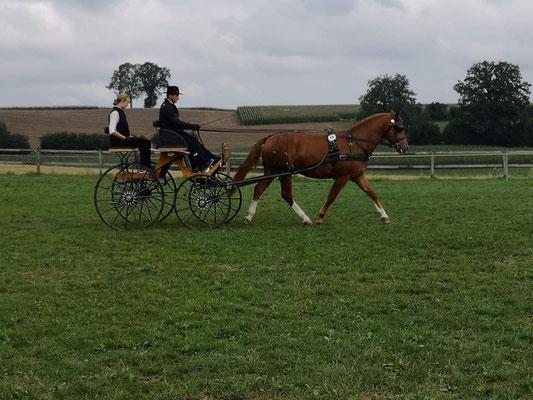 Loranjo vom Sagenhof am Feldtest 18.08.2018