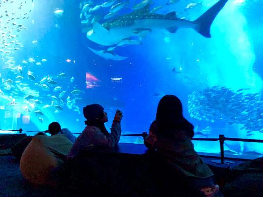 美ら海水族館 オフシーズンはナイトアクアリウムがいい雰囲気です