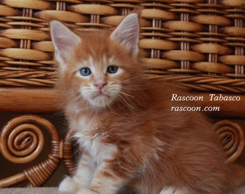 Rascoon Tabasco