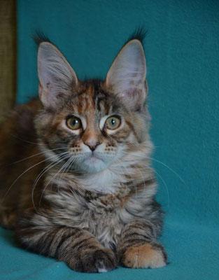 Rascoon Cezaria 3 months