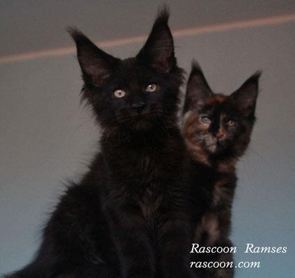 Rascoon Ramses