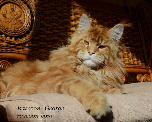 Rascoon George