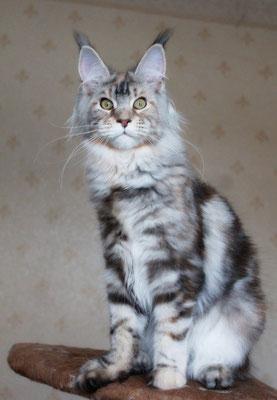 Rascoon Urmila 6.5 months