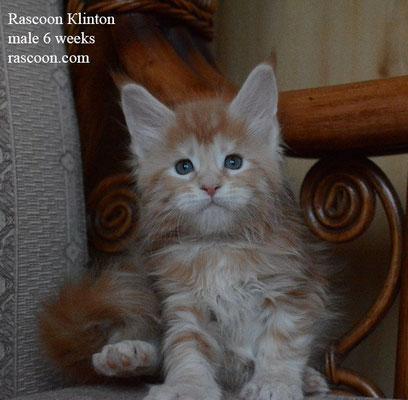 Rascoon Klinton 6 weeks