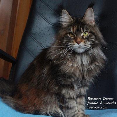 Rascoon Danae female 8 months