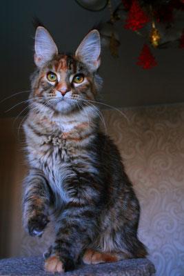 Rascoon Cezaria 5 months