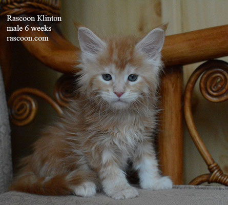 Rascoon Klinton 6 weeks