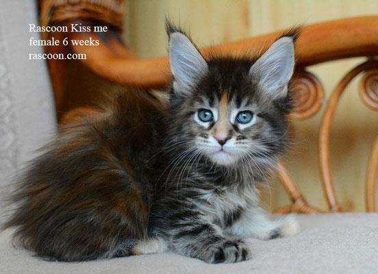 Rascoon Kiss me 6 weeks