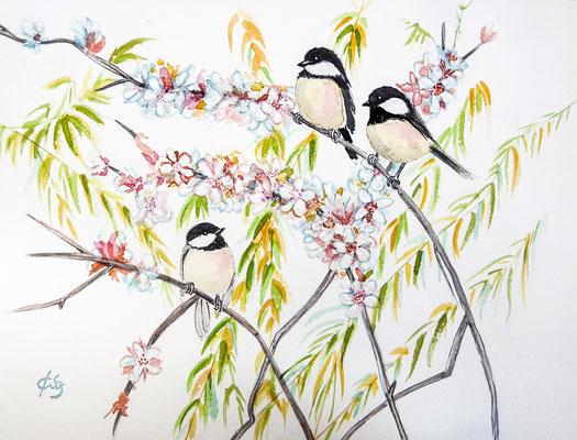 Mésanges nonnettes dans le prunier en fleurs