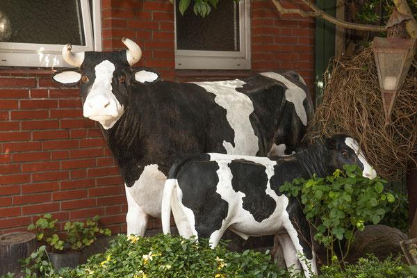 Kühe im Garten