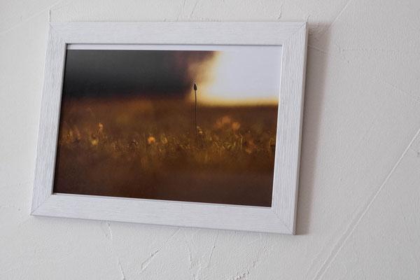 Exposition photo sur le thème de la nature à Rambouillet