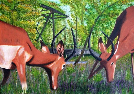 Impala's voor de Jannezandsebrug,  2016  50x70