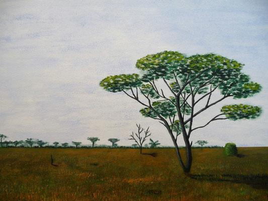 Serengeti, 2013  50x70