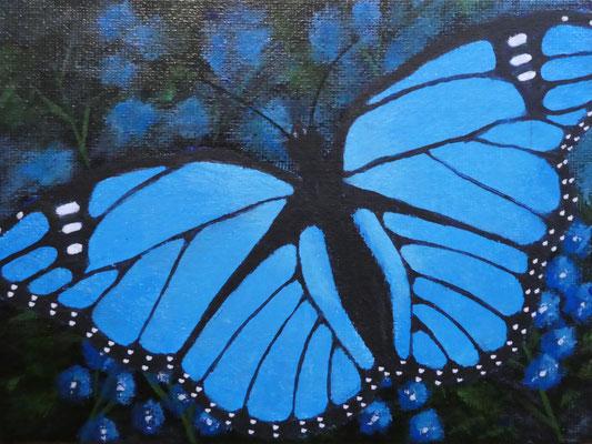 Vlinder blauw 13x18