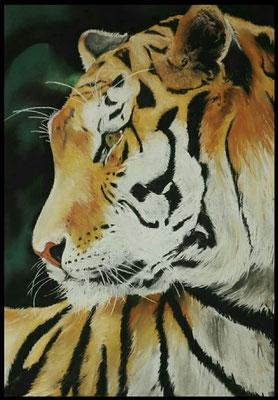 Tigre - 50x65 cm