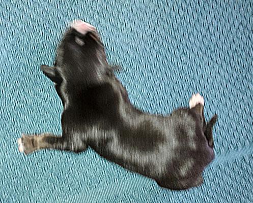 2. Welpe ist eine Hündin, sie ist um 03:10 Uhr geboren und wiegt 450 g