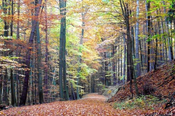 Foto: Tanja Keßler - Herbst im Märkerwald