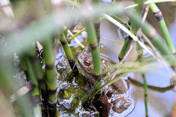Foto: Stefan Kühne - Kröte in der Krötengasse