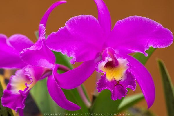 Orquídeas / Orchids. Bali. Indonesia 2018