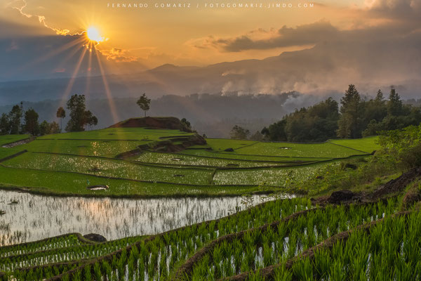 Atardecer / Sunset. Arrozales en cascada / Paddy rice fields. Limbong. Tana Toraja. Sulawesi. Indonesia 2018