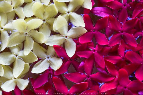 En el jardín / In the garden. Labuanbajo. Flores. Nusa Tenggara. Indonesia 2018
