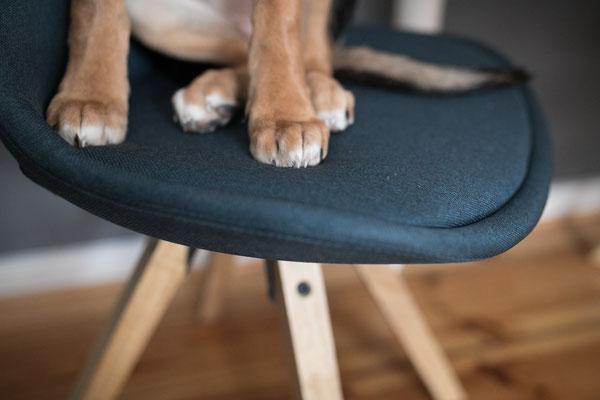 Hundefotografie -Tatzen