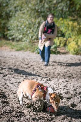 Hundefotografie - beim spielen am Strand