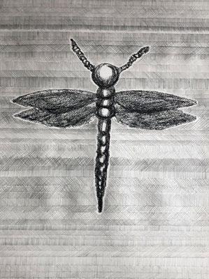 DEMOISELLE ANCONETTA, RETINELLA         Graphit und Ölkreide auf Papier - 70 x 29 cm